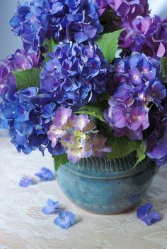 blue hydrangeas - one of my favorite flowers.