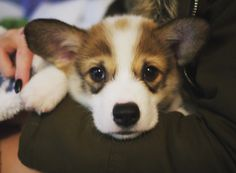 First night he was acting shy. Please meet our new puppy Lucas. http://ift.tt/2gC0UQ9