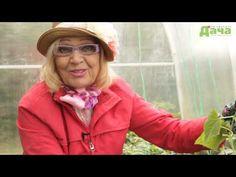Уникальный способ выращивания рассады огурцов от Октябрины Ганичкиной и журнала Любимая ДАЧА - YouTube