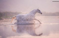 BREAKING THE MIRROR Equine photography by Ekaterina Druz