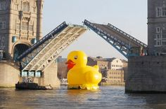 It's laffy duck: Giant floating bath toy takes a trip on the Thames