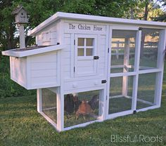 BLISSFUL ROOTS: Chicken Coop Reveal