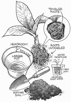 pothos houseplant description and growing tips houseplant Houseplants For Clean Air if you manage to keep alive a houseplant for, oh, more than a few houseplants for clean air