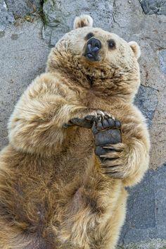 Female bear holding her foot