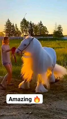 Beautiful Horse Pictures, Most Beautiful Horses, Pretty Horses, Animals Beautiful, Cute Funny Baby Videos, Cute Funny Babies, Funny Animal Videos, Cute Little Animals, Cute Funny Animals