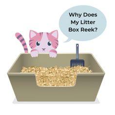 6 Methods to Reduce Litter Box Smell in a Home Cat Urine Remover, Urine Odor, Odor Remover, Pet Odors, Cat Pee Smell, Cat Urine Smells, Dog Smells, Litter Box Smell, Pet Odor Eliminator