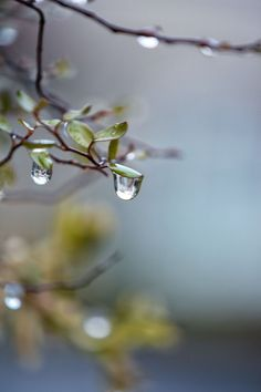 I believe for every drop of rain that falls, a flower grows... ~Raindrops ushering in Spring~