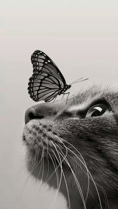 cat Wallpaper for smartphone Cute Baby Cats, Cute Baby Animals, Kittens Cutest, Cats And Kittens, Cute Cat Wallpaper, Animal Wallpaper, Disney Wallpaper, Beautiful Cats, Animals Beautiful