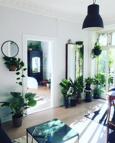 """2,249 Likes, 33 Comments - 🌿My Urban Jungle Up North ❄️ (@arcticgardener) on Instagram: """"One of the best effects of having 100 house plants? 🏡 Plants remove toxins from the air. Studies at…"""""""
