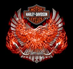 Harley Davidson Events Is for All Harley Davidson Events Happening All Over The world Harley Davidson Posters, Harley Davidson Pictures, Harley Davidson Helmets, Harley Davidson Tattoos, Motor Harley Davidson Cycles, Davidson Bike, Harley Davidson Street, Harley Davidson Motorcycles, Vintage Motorcycles