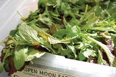 Cashew Hempseed Spicy Greens Salad recipe by Bauman College (pictured: Aspen Moon Farm's spicy greens mix at the Boulder Farmers Market) Weekly Newspaper, Green Salad Recipes, Hemp Seeds, Aspen, Bouldering, Farmers Market, Spinach, College, Moon