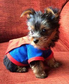 Me han dado hoy super poderes caninos, me gusta roer las tibias de los humanos...