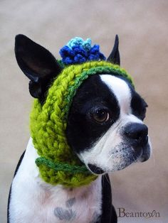 green dog hat