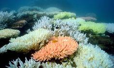 """Great Barrier Reef species more at risk from climate change than marine life elsewhere that can adapt by """"invading"""" new regions. Primary literature can be found here: http://www.nature.com/nclimate/journal/vaop/ncurrent/full/nclimate2769.html"""