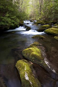 You can't find a more peaceful place than the Smoky Mountains.