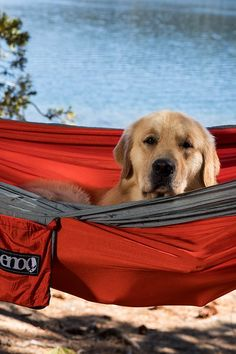 Nobody loves the great outdoors in a hammock more than the family pooch. Activities Near Me, Outdoor Activities For Adults, Outdoor Hammock, Outdoor Fun, Hammock Straps, Cheap Running Shoes, Rappelling, Adventure Activities, Extreme Sports