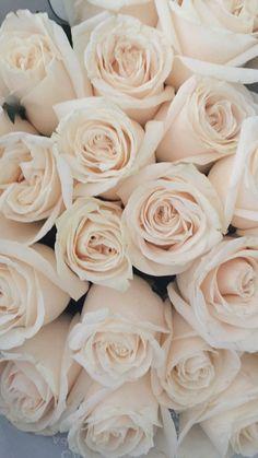 Flower Iphone Wallpaper, Iphone Homescreen Wallpaper, Flower Backgrounds, Flower Wallpaper, Beautiful Rose Flowers, White Flowers, Rose Background, Aesthetic Backgrounds, Flower Petals