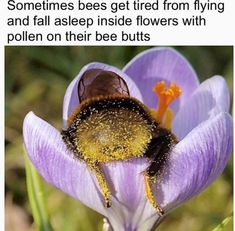 he is thic bee Funny Animal Memes, Cute Funny Animals, Funny Animal Pictures, Cute Baby Animals, Funny Cute, Animals And Pets, Hilarious, Beautiful Creatures, Animals Beautiful