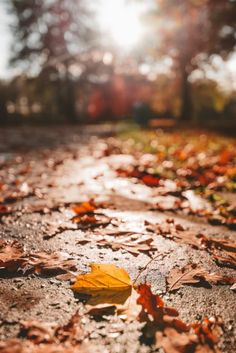 Autumn leaves in Świerklaniec Park, Poland Beautiful Park, Beautiful Places, Autumn Photos, Just Like Heaven, Genius Loci, Autumn Walks, Bright Pictures, Cities In Europe, Above The Clouds