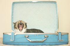 Para los gatos, cualquier sitio es bueno para una siesta... ;) #gatos #catlovers #gato