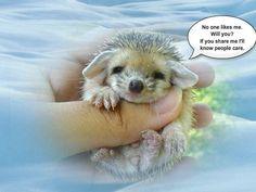 #piZap by CarolineWeaver  cute
