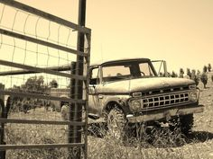 The best setting ever, a Ford pick up and a feild.