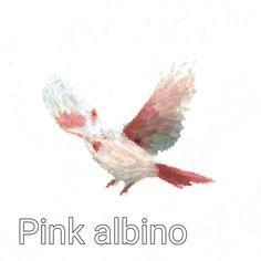 Pink Albino Cardinal Brush