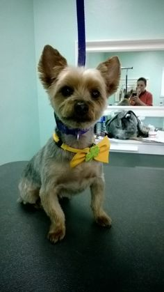 68 best grooming shop images on pinterest pets dog accessories the upscale tail ltd pet grooming salon naperville il solutioingenieria Image collections