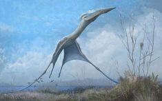 Everybody's favourite Transylvanian azhdarchid pterosaur.