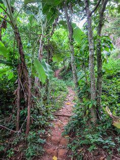 Jungle Trek in Kep Cambodia