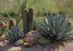 Desert Landscaping be equipped landscaping with big rocks be equipped low mainte… - front yard landscaping ideas curb appeal Desert Landscaping Backyard, Succulent Landscaping, Landscaping With Rocks, Landscaping Plants, Front Yard Landscaping, Arizona Landscaping, Ranch Landscaping Ideas, Farmhouse Landscaping, Arizona Gardening