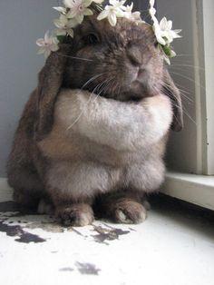bun featuring floral crown