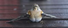"""Learn what to do when you hear the terrible """"thud"""" of a bird hit a window… and find out how you can help prevent it!"""