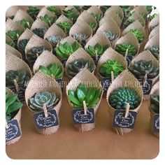 Best 11 Obsessed with this new succulent trend succiepotinapot Obsessed succiepotinapot Succulent trend SkillOfKing Com is part of Planting succulents - Succulent Wedding Favors, Cactus Wedding, Succulent Gifts, Succulent Gardening, Cacti And Succulents, Wedding Favours, Planting Succulents, Wedding Gifts, Propagating Succulents
