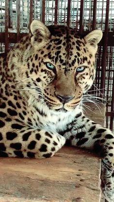 Animals And Pets, Cute Animals, Cheetahs, Woodcarving, Amazing Nature, Big Cats, Simple, Beautiful, Paisajes