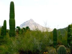Beautiful 4BR/2BA Home - Tucson Catalina Foothills in Tucson