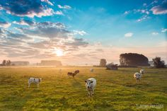 Kalkense Meersen by Jeffrey Van Daele on Van, Mountains, Live, Nature, Travel, Animals, Pictures, Naturaleza, Viajes