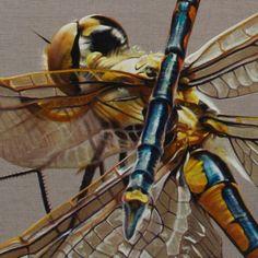 It's a cold and grey day and I am in my studio dreaming of warm sunny days and dragonflies!  Detail from Hemicordulua australiae 2011 oil on linen 96x126cm http://ift.tt/2tw3w8c - #gatesofparadise #melbournelife #dragonfly#australianartist #contemporaryart #melbourneartist #oilonlinen #oilpainting #botanicalart #annemiddleton #gbartconsulting