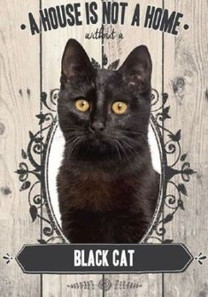 Black Cat A house is not a home without a Black Cat Light weight metal sign Made from premium quality endurable metal plate here in the UK 14 x 20 cm #CatGatos