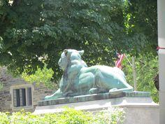 Princeton Lion
