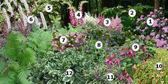 Créer un massif de fleurs à l'ombre : hortensia entre deux grands arbres dans la jardin