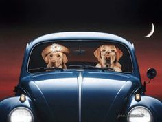 VW Beetle Hounds