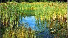 Una domenica per ricordare l'urgenza di difendere laghi, lagune e corsi d'acqua che svolgono un ruolo decisivo per le specie migratorie e per la pesca, il
