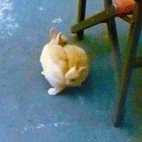 bunnyfood:    (viarurinacci)
