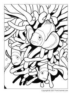 371 Best Coloring Book Fish Sea Life Seashells Images