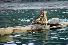 Inuit man, in his brilliant kayak knowledge!  Such wise and beautiful design ~ love that!!!