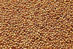 Cuáles son las propiedades de las semillas de mijo?
