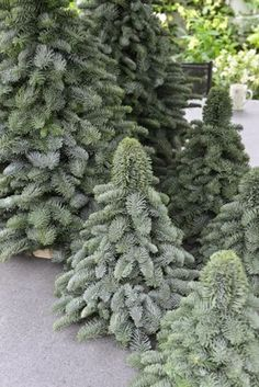 handmade Noble Fir trees