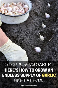 Stop Buying Garlic. Here's How To Grow An Endless Supply Of Garlic Right At Home