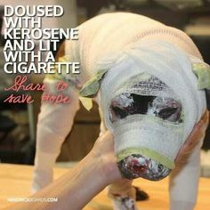 Please share to stop animal abuse! Thanks!